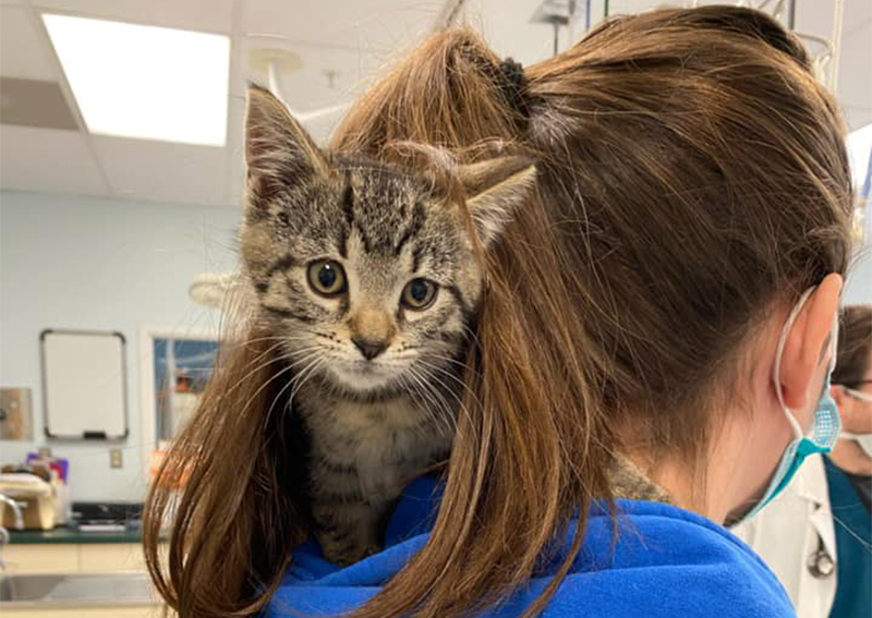 Cat Veterinary Care, West Trenton